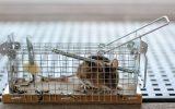 Mausefalle und Lebendfalle in der Schädlingsbekämpfung